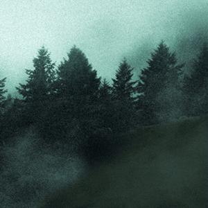 kolaritsch multimedia arts forest favicon